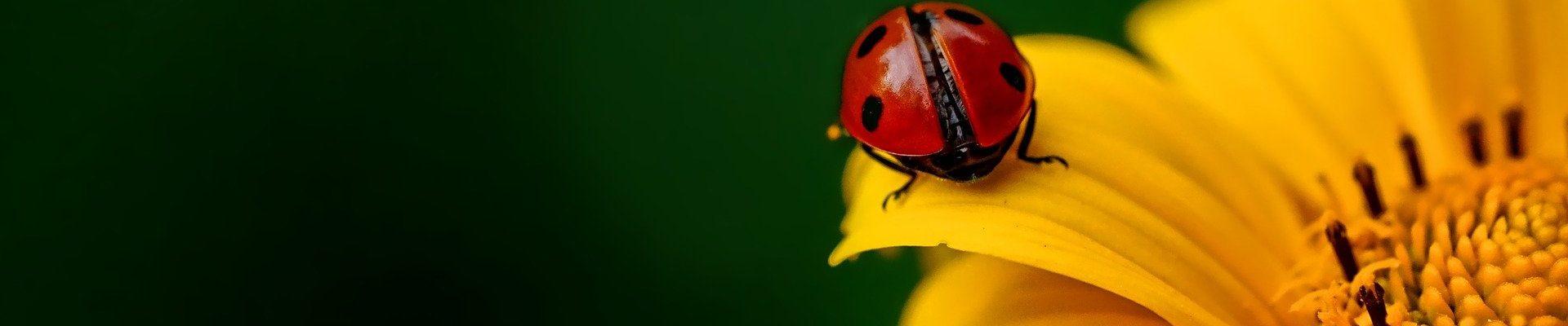 ladybug-3475779_1920